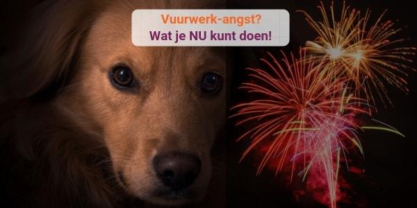 Is je hond of kat bang voor vuurwerk? | Chanimal