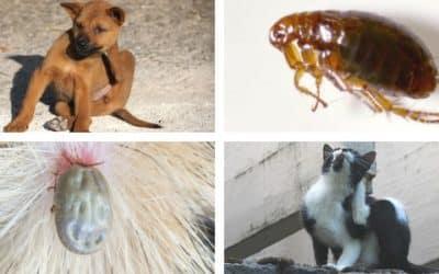 Vlooien en teken bestrijden op een diervriendelijke manier | Chanimal