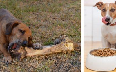 Het beste hondenvoer | Chanimal