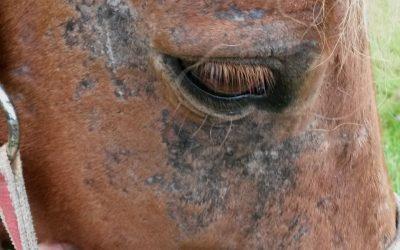 Zomereczeem bij paarden | Chanimal.nl